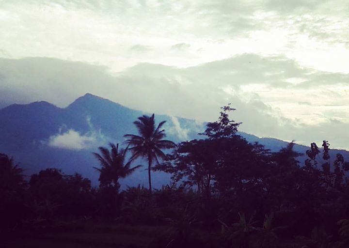 This Fertile Land - Java