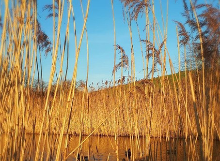 Reed Tales