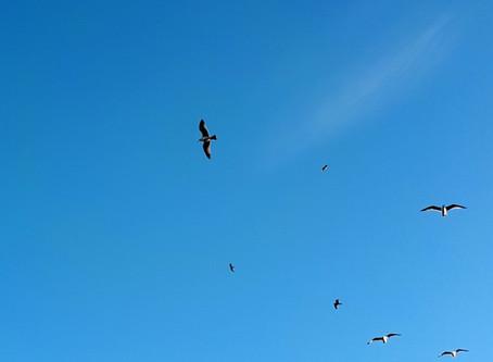 The Winter Gulls