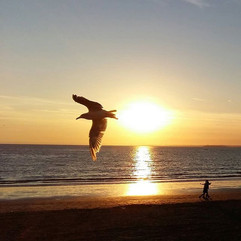 The Sunset Gulls  The gulls swooped with