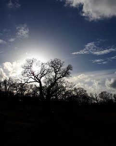 Dark Sunlight__Sometimes all you see_In
