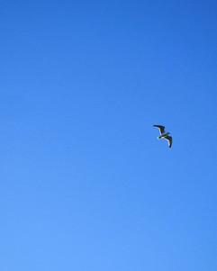 The Bird  A single bird flies Witness to