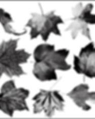 leaf-brushes_thumb.jpg