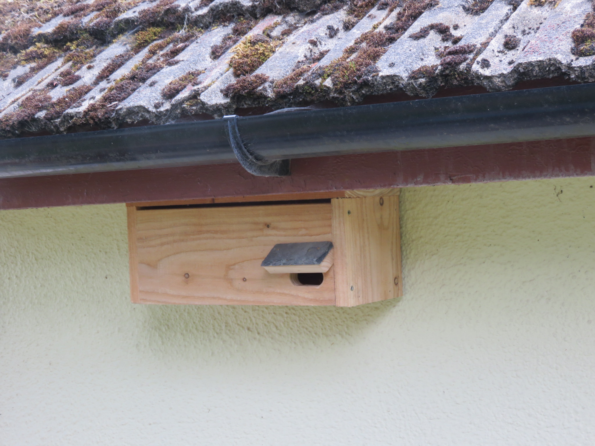 Common swift box