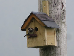 Welsh Slate bird box