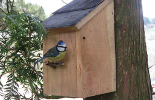 Bord boxes with Welsh Slate roofs, tit boxes