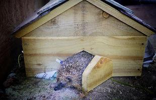 Hedgehog house, hedgehog home, hedgehog box