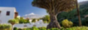 Canarische eilanden Tenerife El Teide Drakenbloedboom Icod de los Vinos