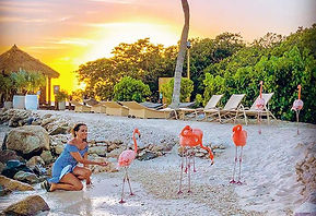 If you ever visit the Flamingo Beach in