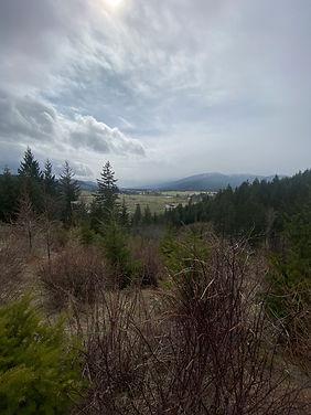 wildwood hike view.jpg
