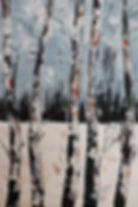 bouleaux enneigés