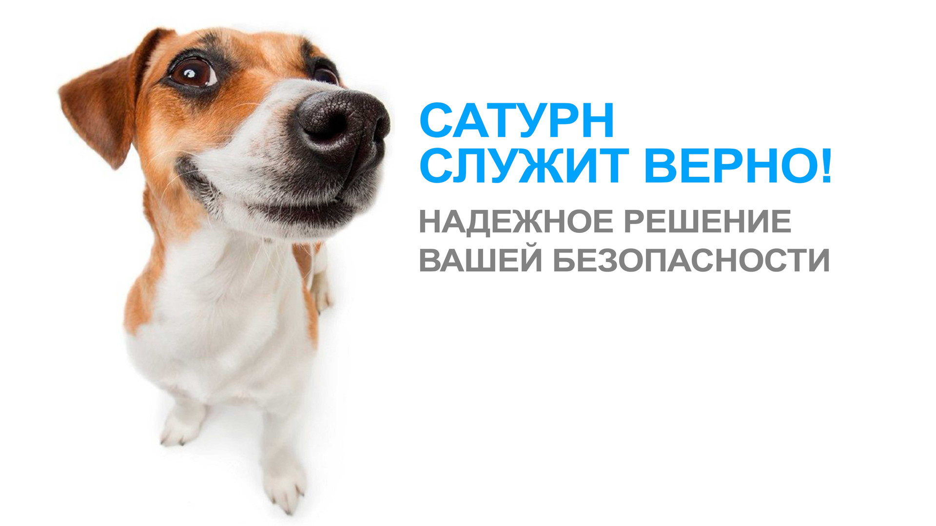 7С-СОБАЧКОЙ-ЗАСТАВКА.jpg