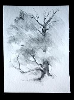 Mending Tree 2847
