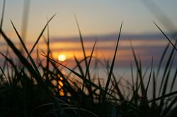 Gräser, Sand und Sonne