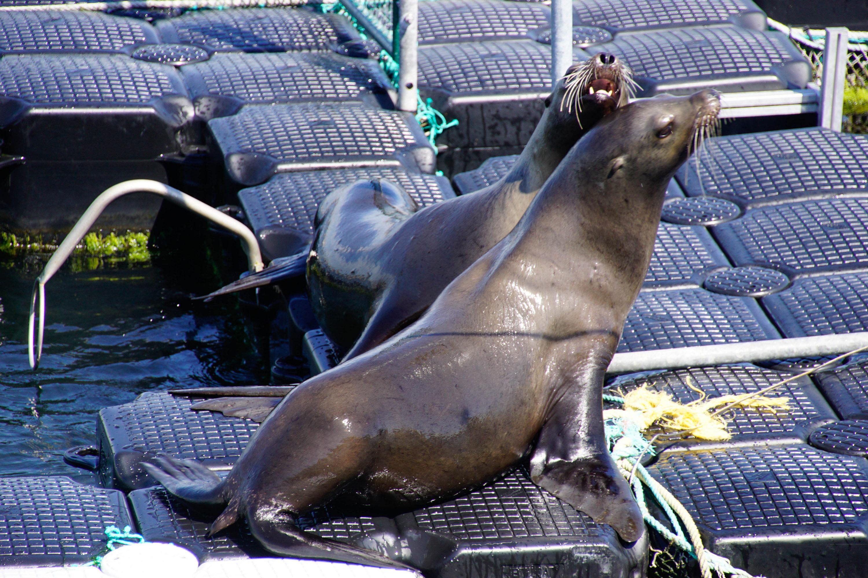 Seehundstation der Uni Rostock