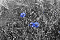 zwei einzelne Blumen