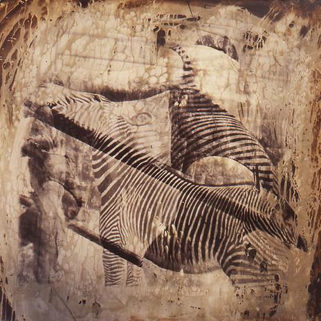 1993 - Braun Etelka metamorfózisa 100x100 cm