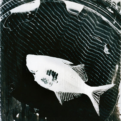 1996 - Üvegsügér-fotogram 100 x 160 cm