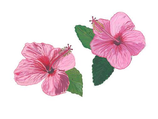 hibiscus flowers.jpg