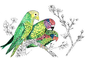 inky birds.jpg