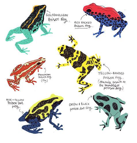 poisonous frogs colour new layout colour