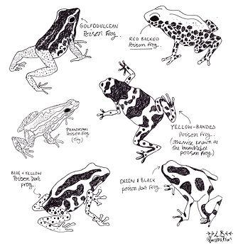 poisonous frogs colour new layout black