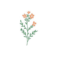 Simple wildflower for a Wednesday 🌿.jpg