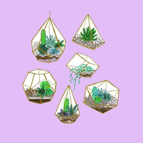 terrariums c1.jpg