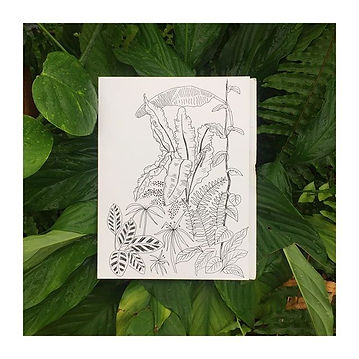 Some fineliner plant sketches in my sket