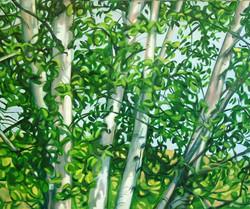 Summer Birches_edited