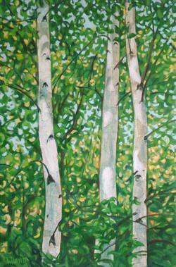 Three Birches -DSCF2125