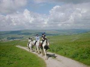 horseswalkingphoto.jpg