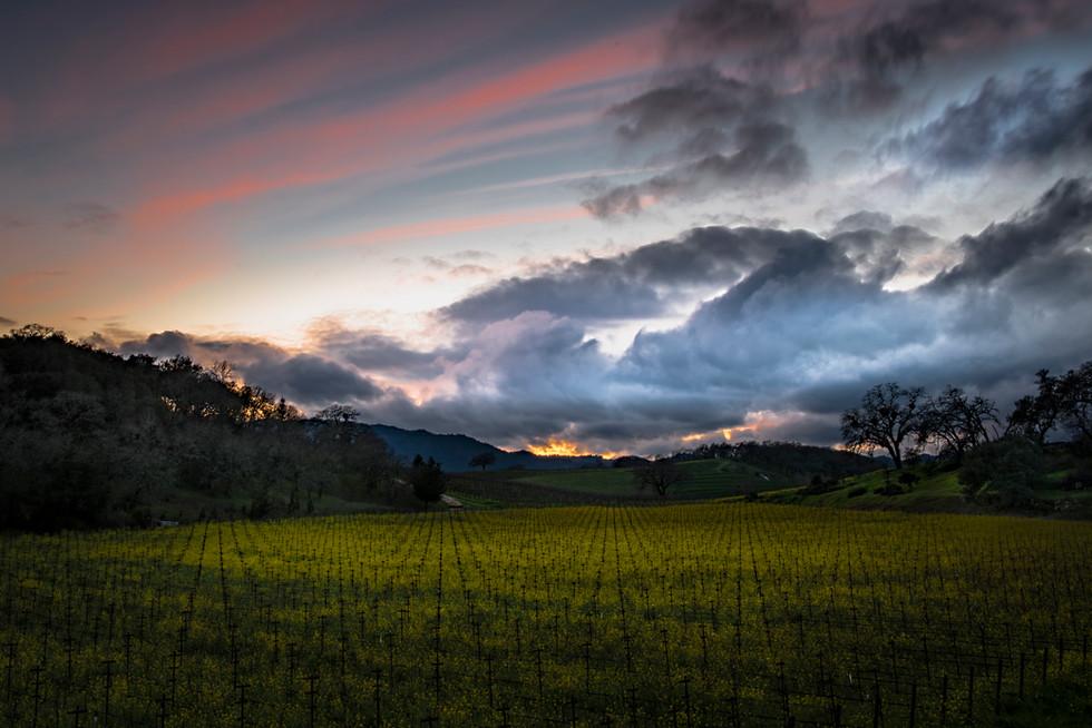 Silverado Trail Sunset #2