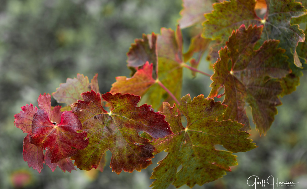 Holiday Leaves