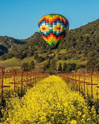 Balloon Over Mustard