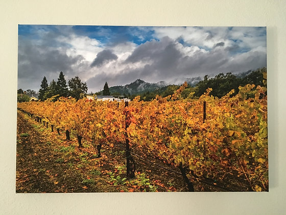 Fall Color in a Napa ValleyVineyard