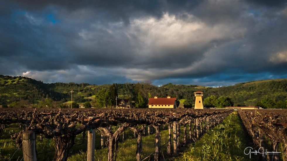 Vineyard in Rutherford