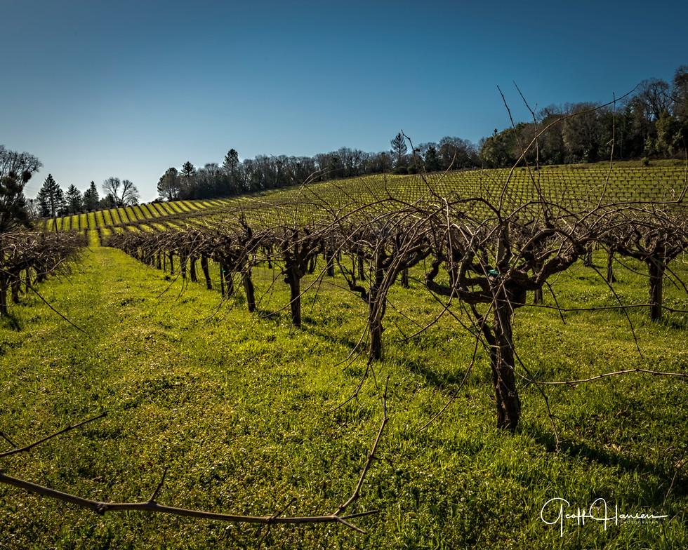 Howell Mountain Vineyard