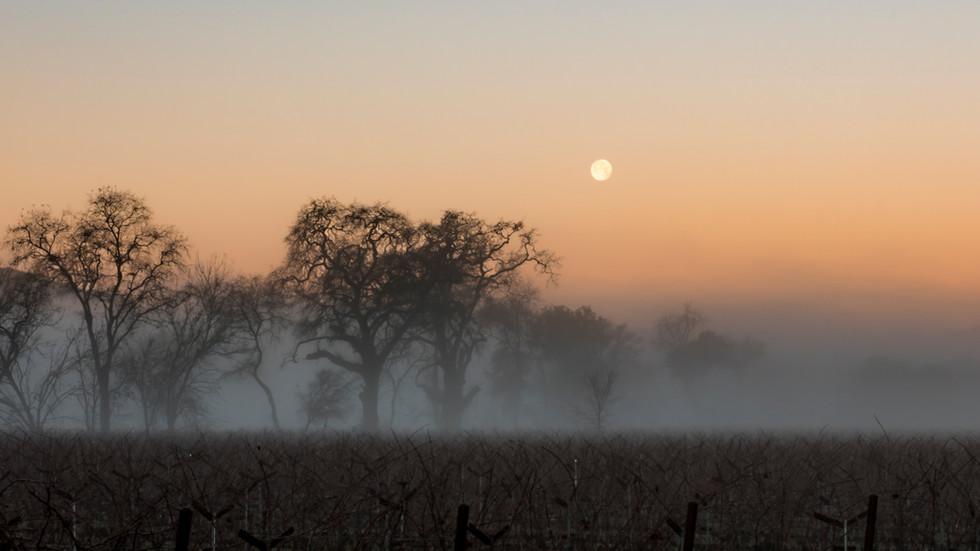 Moonset over Foggy Vineyard