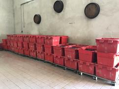 Quai de réception - Pinot Noir - vendanges 2019
