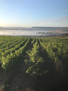 Vignoble de Cumières