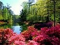 Callaway_Gardens_Wallpaper_wzlhj.jpg