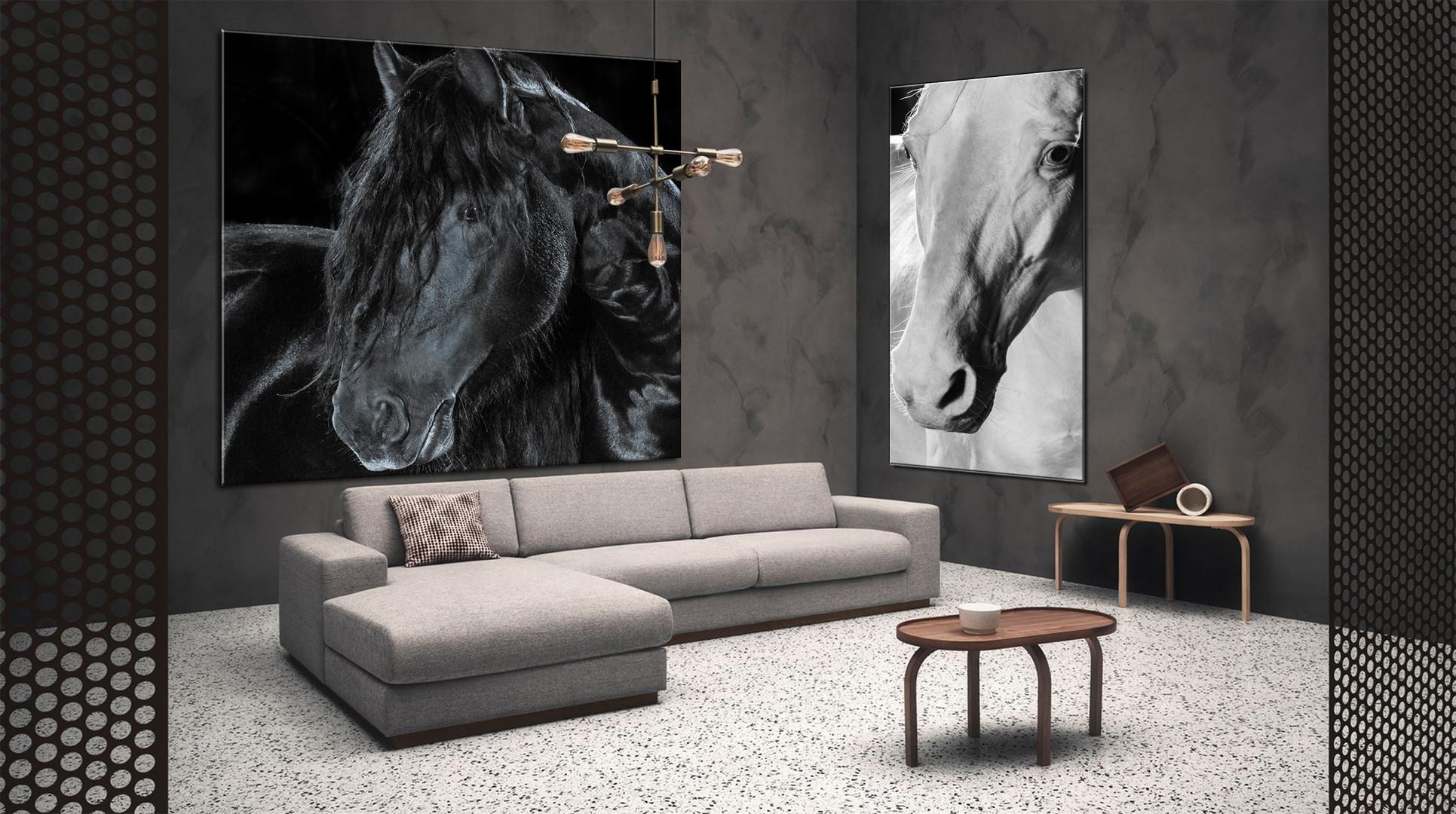 Frison black & white