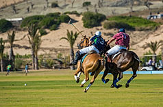Polo Marocco