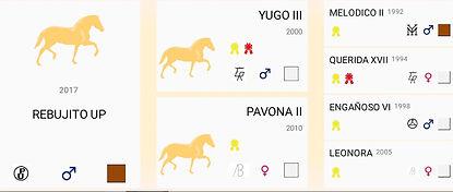 Pferd-Rebujito3.jpg