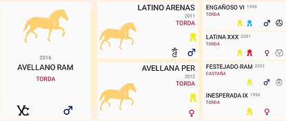 Pferd-Avellano3.jpg
