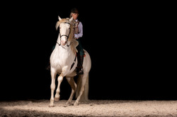 Embrujo Lusitano Hengst