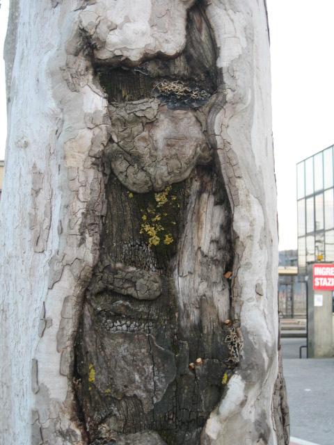 Tree face
