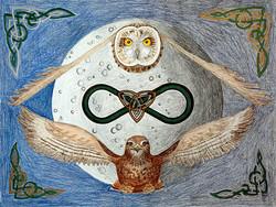 Owl & Hawk: Infinity
