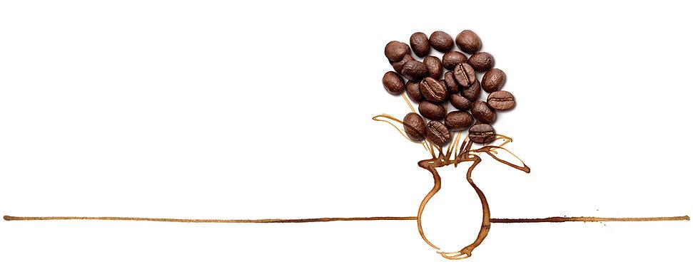 kaffebeblume.jpeg